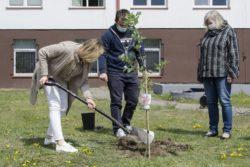 Trzy osoby sadzą drzewko na trawniku przed budynkiem.