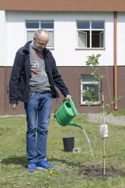 Mężczyzna podlewa posadzone drzewko.